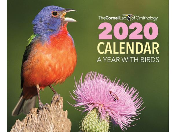 Free 2020 Birds Wall Calendar From Cornell Lab!