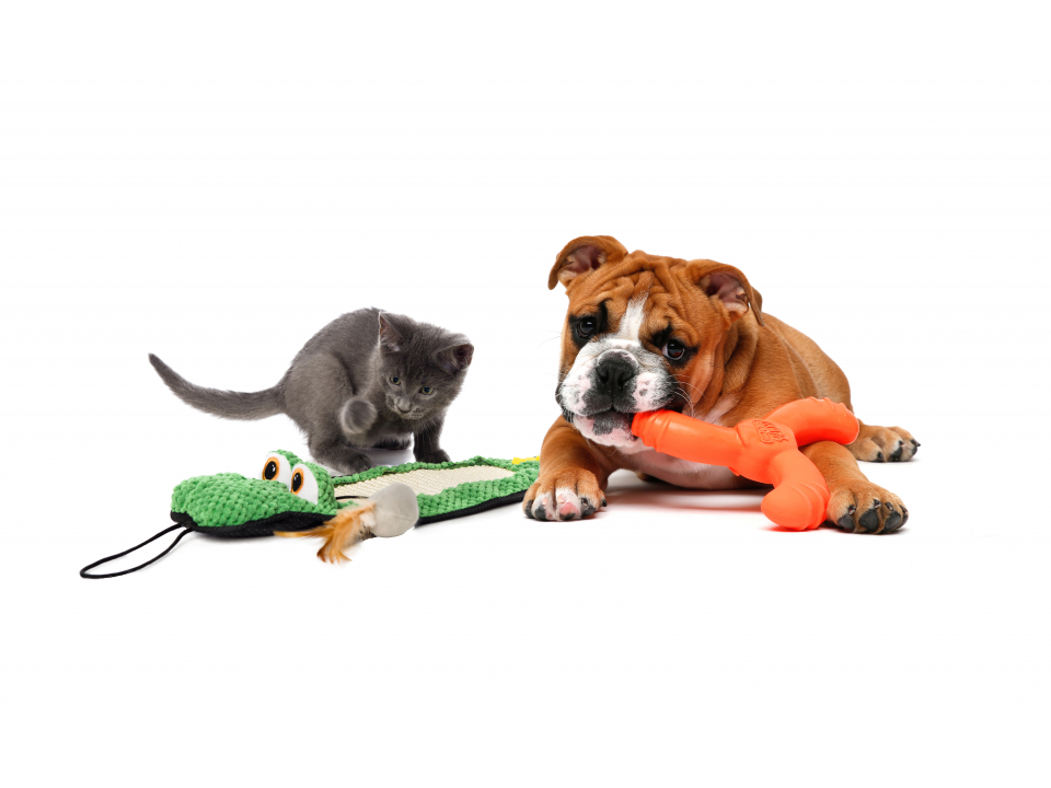 Free Pet Toy From Hartz
